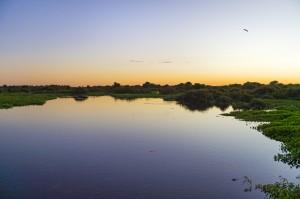 PantanalFoto por: Tambako the Jaguar