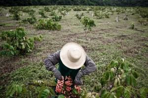 Projeto Guaraná Sustentável
