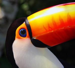 os principais animais da fauna amazônica pensamento verde