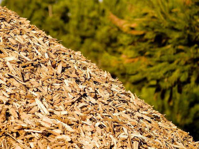 Resultado de imagem para biomassa energia