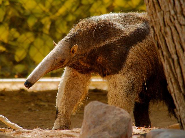 animais em extinção na floresta amazônica pensamento verde