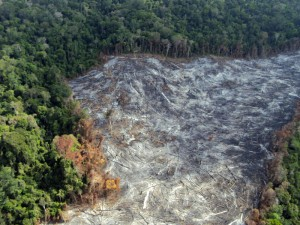 Arco do desmatamento da amazônia