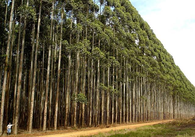 A Importância Da Silvicultura Para A Preservação Do Meio