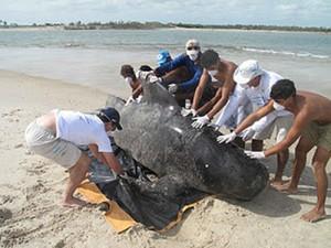 Resgate de baleia