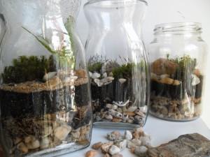 Terrário em vidro de conserva