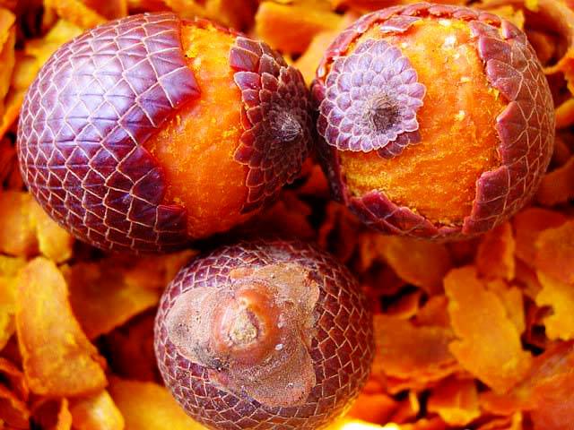 fruto de Buriti