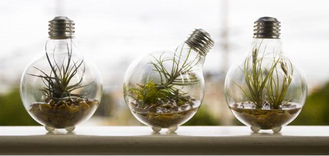 vaso com lâmpada