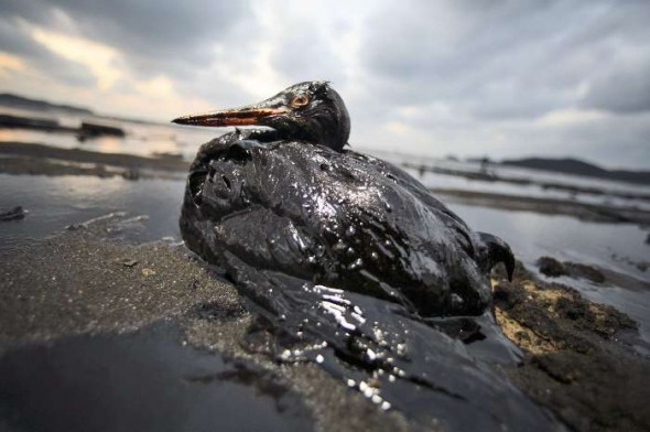 Impacto ambiental do Petróleo