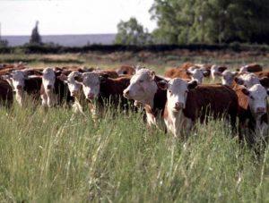 Ecossistema agrícola