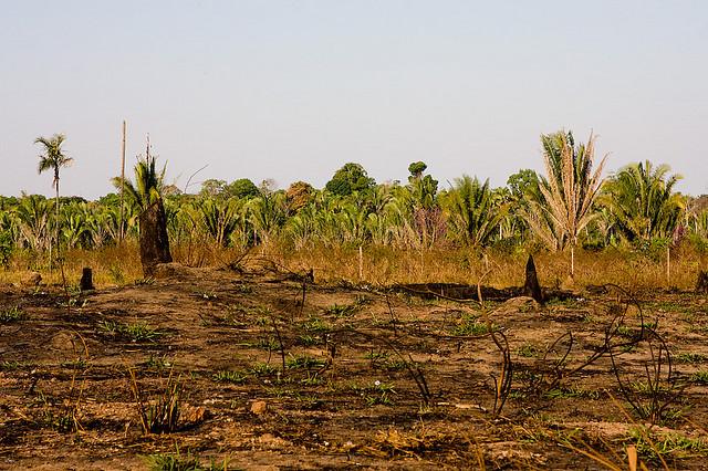 4d9f70affdbe9 Conheça as principais consequências do desmatamento na Amazônia ...