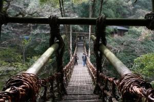 Ponte feita de raiz de planta