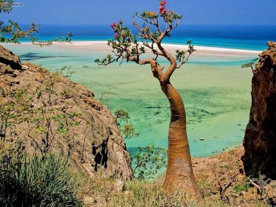 Ilha de Socrota