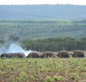 Desmatamento da Mata Atlântica na região de Minas Gerais