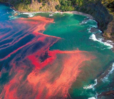 Maré Vermelha