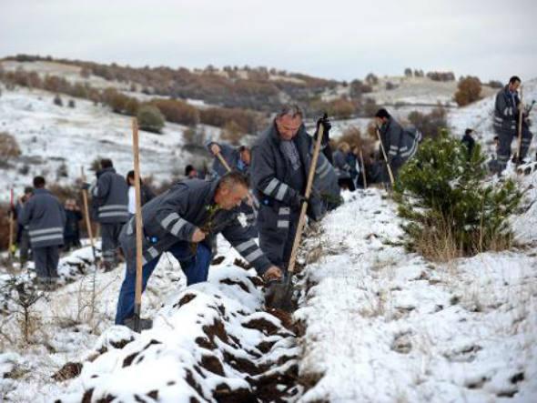 5 milhões de árvores são plantadas na Macedônia
