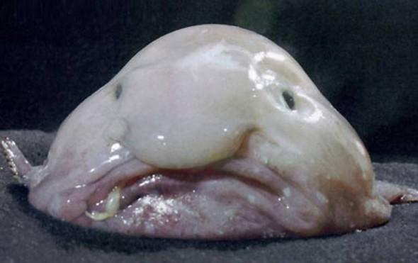 Peixe-gota