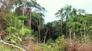 Reserva Extrativista Chico Mendes - Brasiléia (AC)