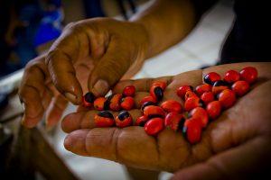 Alimento indígena