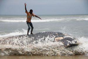 Baleia na costa de Gana mg1