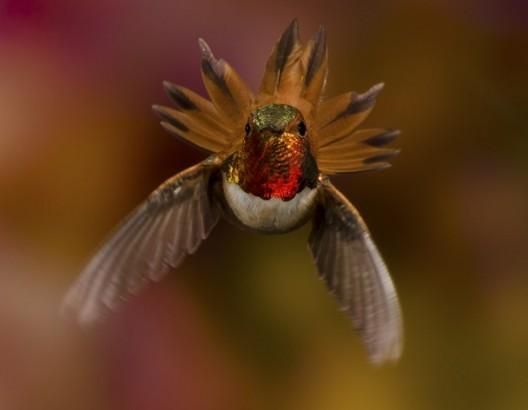 Beija flor em movimento
