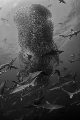 Corrida das sardinhas