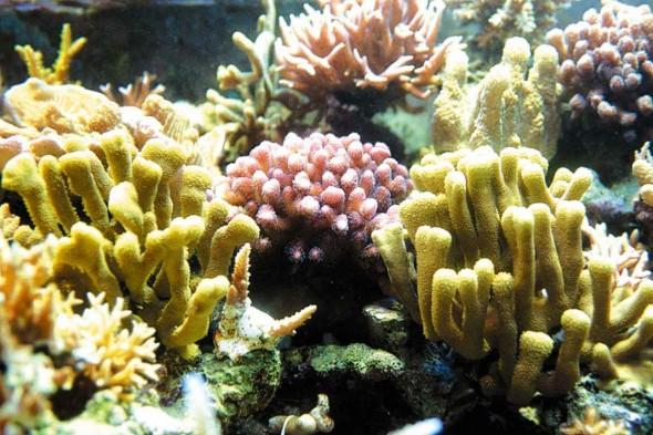 Recifes de Corais do Caribe