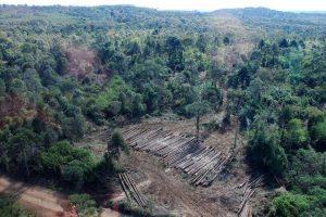 Floresta de Araucaria