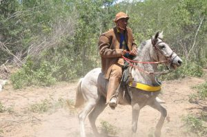Cavalo nordestino