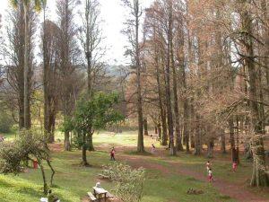 Parque Estadual Alberto Lofgren (Horto Florestal)