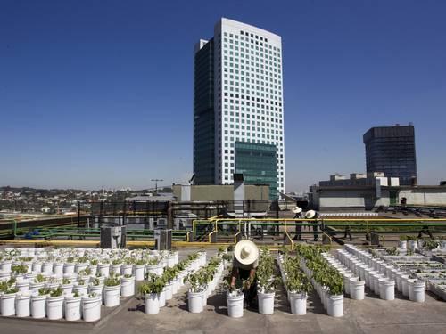 Horta urbana