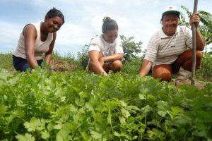 Agricultura de subsistência