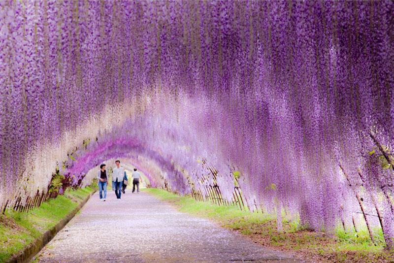 Kawachi Fuji Garden, Japão