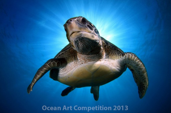 Ocean Art Contest Winners