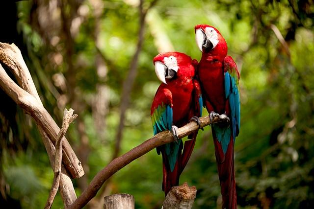 conheça as espécies endêmicas da amazônia brasileira pensamento verde