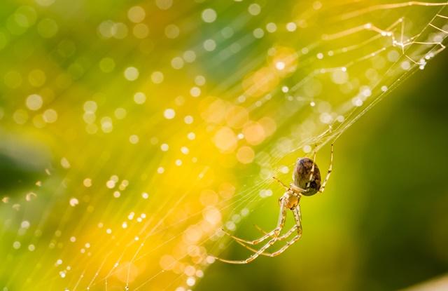 foto de aranha em cima da teia