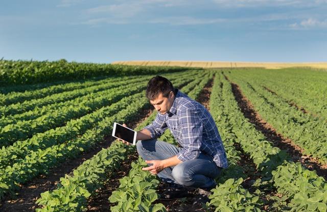 foto de homem olhando plantação
