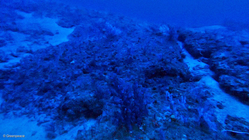 corais na amazônia